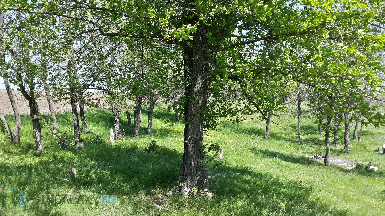 Пример фото с камеры Galaxy S4 в HDR - дерево