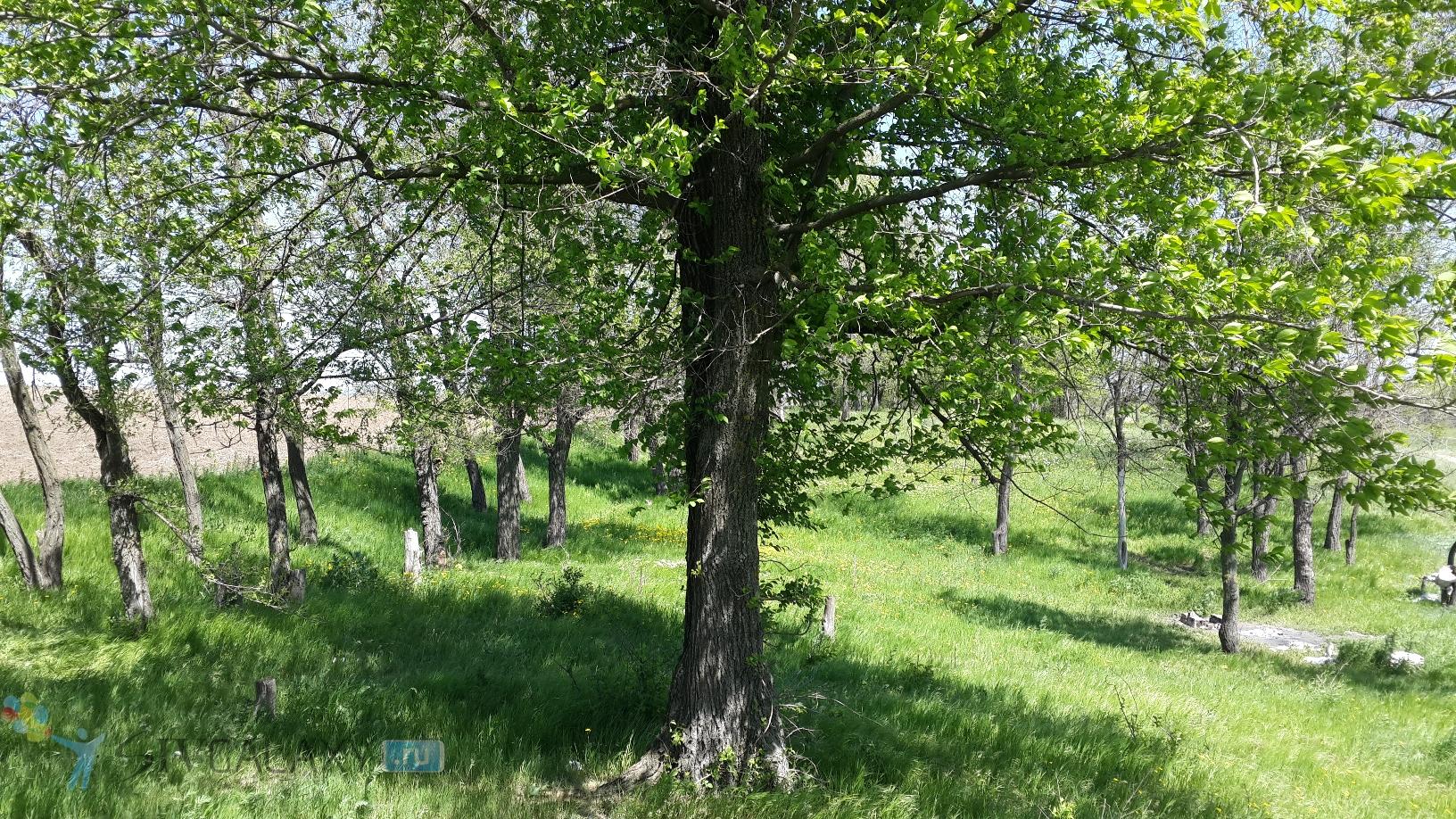 Фото с камеры Galaxy S4 - супер дерево