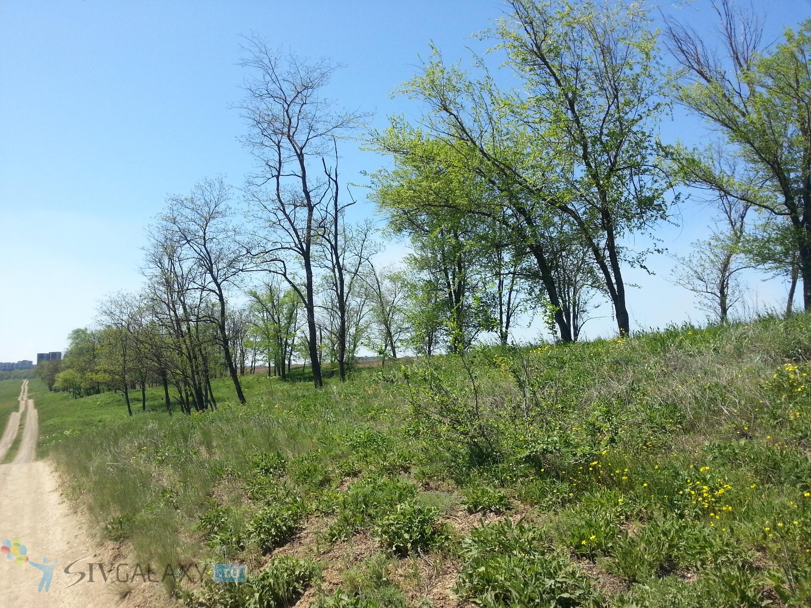 Фото с камеры Samsung Galaxy S3 - несколько деревьев