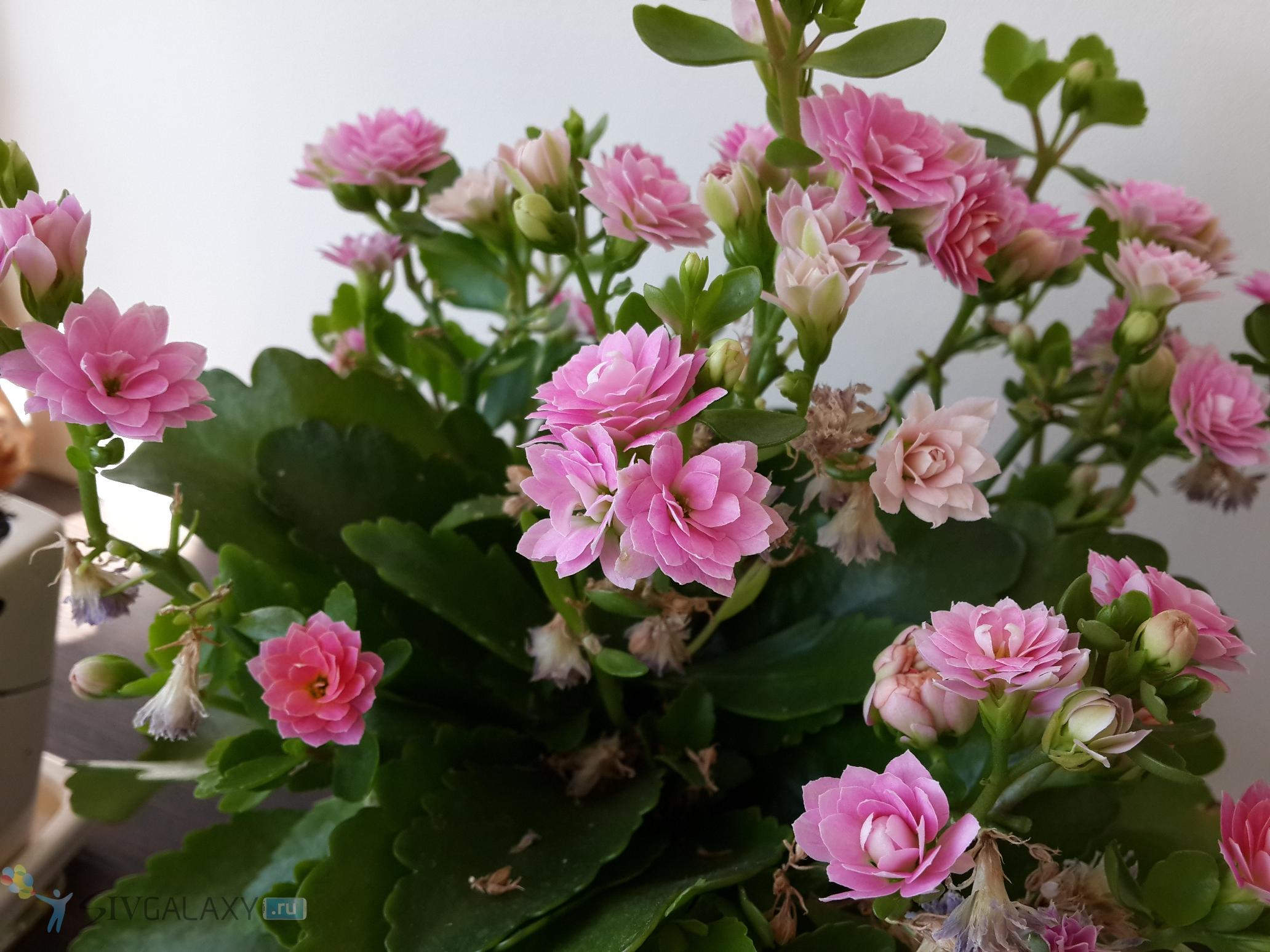 Фото с камеры Samsung Galaxy S4 - цветочки