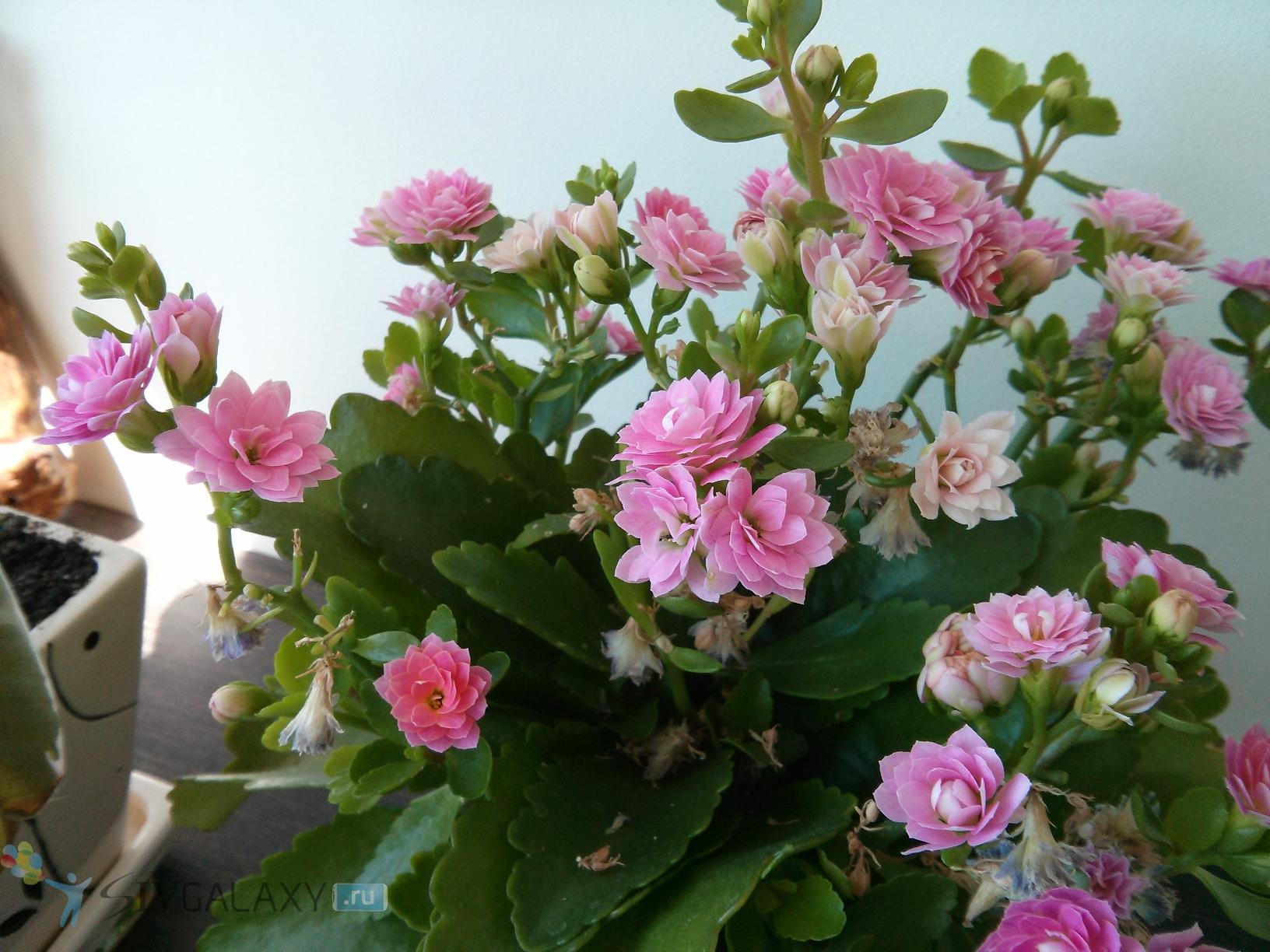 Фото с камеры LG Nexus 4 - цветы на столе