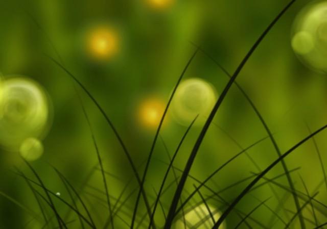 Colorful Summer Meadow - летние анимированные обои