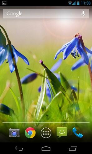 Blue Flowers - анимированные обои с цветами на Galaxy S4