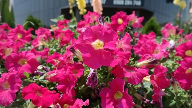 Цветы - фото с камеры Samsung Galaxy NX