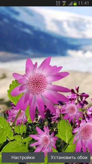 Flowers – горные цветы для Samsung Galaxy S4
