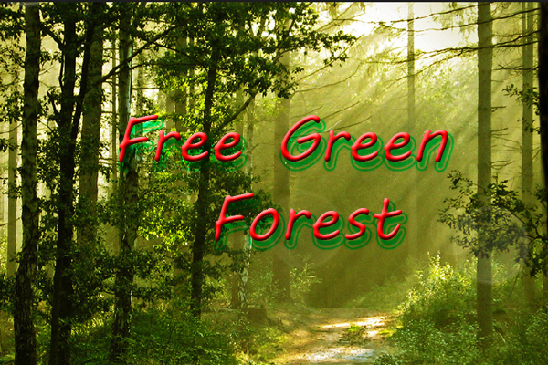 Free Green Forest LWP – лесная дорога
