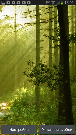 Free Green Forest LWP – лесная дорога для Samsung Galaxy S4