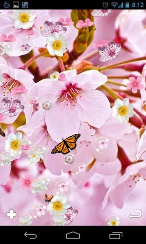 Sakura Pro Live Wallpaper - живые обои на Galalxy S4
