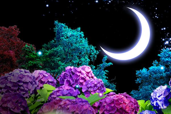 Ajisai-Firefly LiveWallpaper – цветы гортензии для Galaxy S4