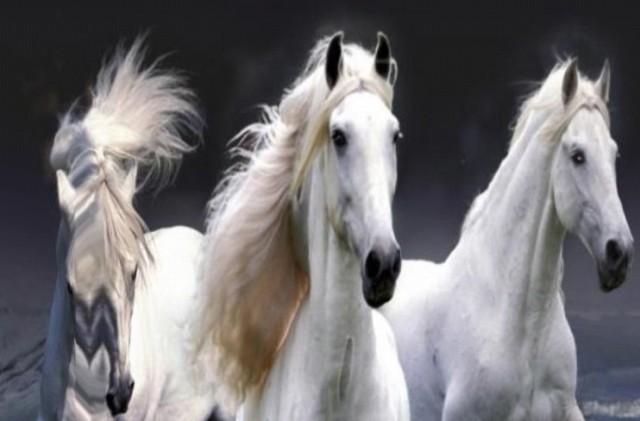 Beautiful Horses Wave effect - анимированные обои на Галакси С4