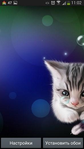 Сонный Котенок – милое создание для Галакси С5, С4, Нот 3
