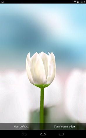 3D Tulip Live Wallpaper – яркие тюльпаны для Samsung Galaxy Note 3, S5, S4, S3