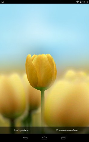 3D Tulip Live Wallpaper – яркие тюльпаны для Samsung Galaxy Note 3, S5, S4, S3
