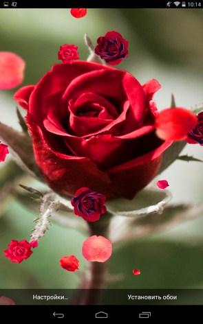 Розы - живые обои для Samsung Galaxy Note 3, S5, S4, S3