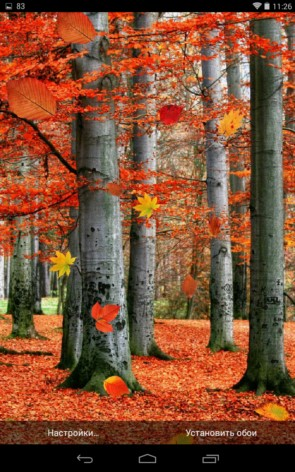 Осенние живые обои для Galaxy S5, S4, S3, Note 3, Ace 2
