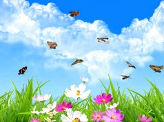 Real Butterfly – бабочки повсюду на Galaxy S5, S4, S3, Note 3, Note 4, Ace 2
