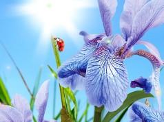 Весна – живые обои и с пробуждающейся природой для Galaxy S6, S5, S4, S3, Note 3, Note 4, Ace 2