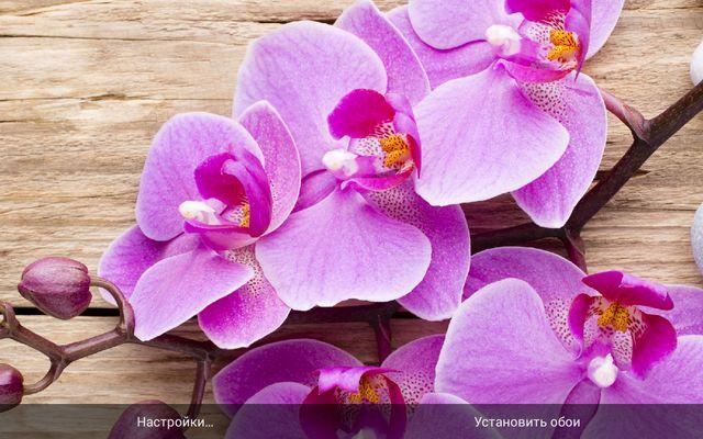 Цветы Орхидеи Живые Обои для Samsung Galaxy