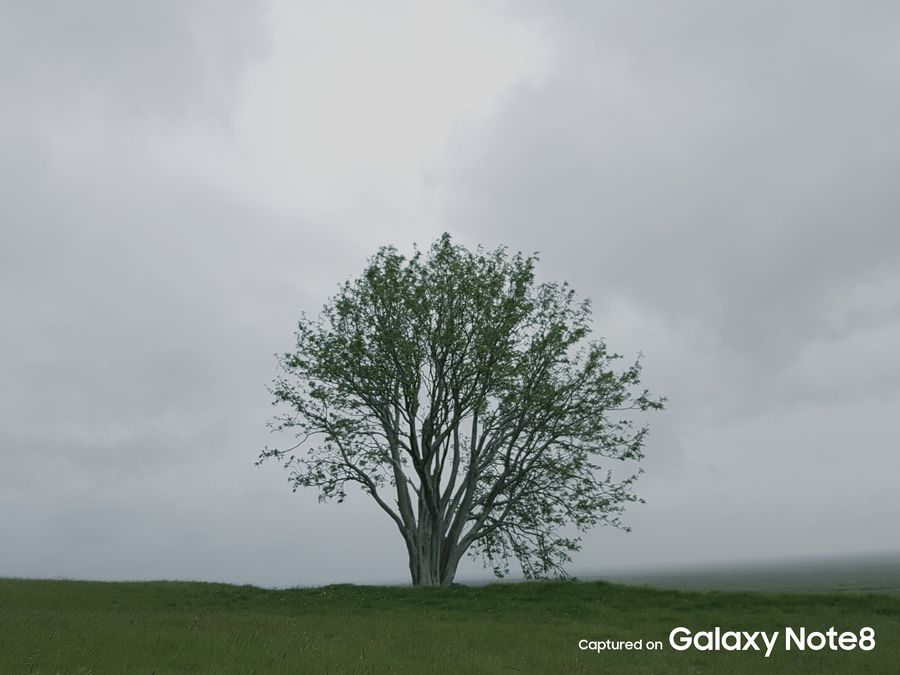 Фото с камеры Galaxy Note 8